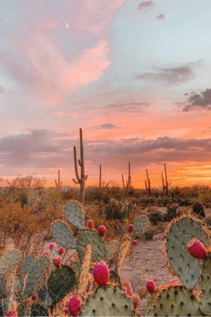 boho-sunset-cactus
